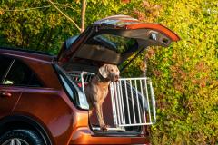 2021-Cadillac-XT4-Sport-Europe-Exterior-039-rear-three-quarters-trunk-open-dog